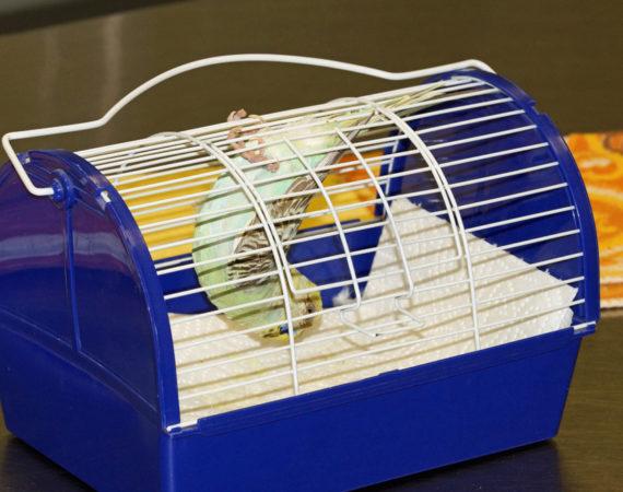 Vögel beim Tierarzt – Tipps für den Transport