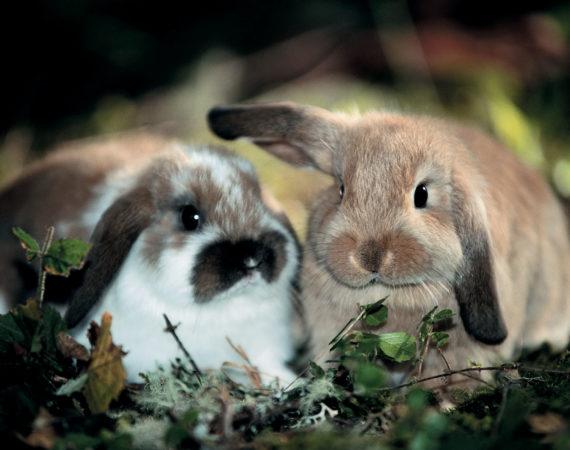 So kommen Kaninchen und Co entspannt durch den Sommer