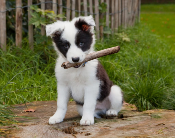 Gefahren des Sommers, die jeder Hundebesitzer kennen sollte