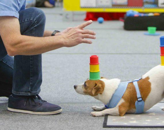 Ehrenamtliches Engagement der Hunde wegen