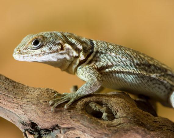 Gesundheitscheck bei Reptilien