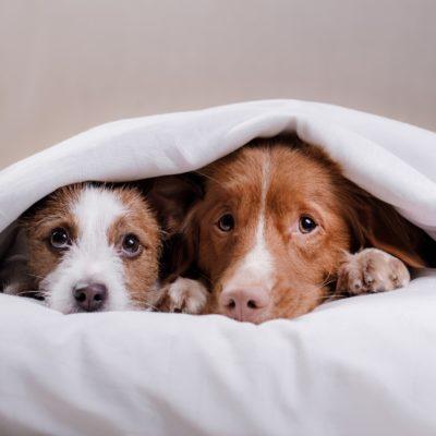 Hunde an Silvester_© Schutterstock