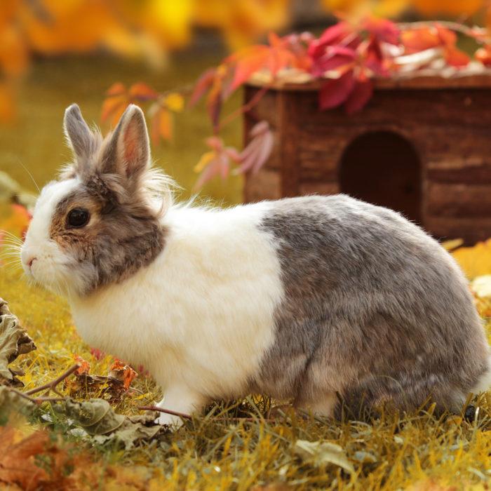 Kaninchen im Freigehege: An was Halter jetzt denken sollten