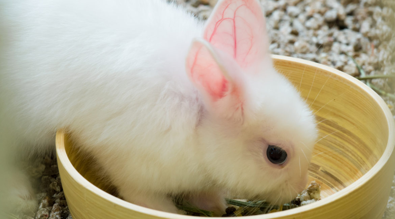 Zahn-Check Kaninchen