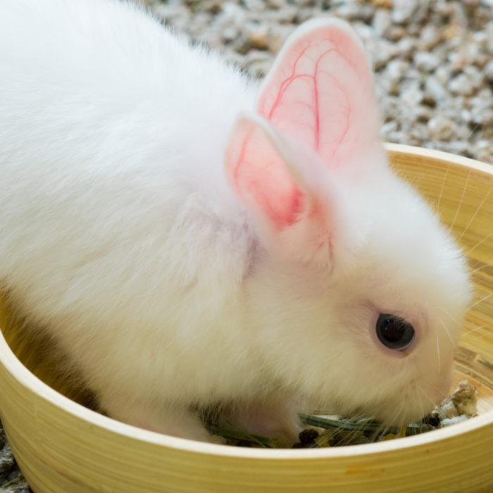 Zahn-Check bei Kaninchen und Meerschweinchen