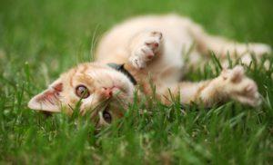Katze_Pflanzen