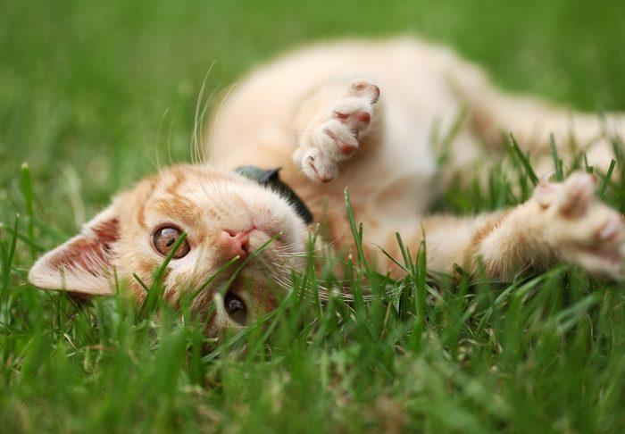 Giftige Pflanzen: Risiko für Katzen