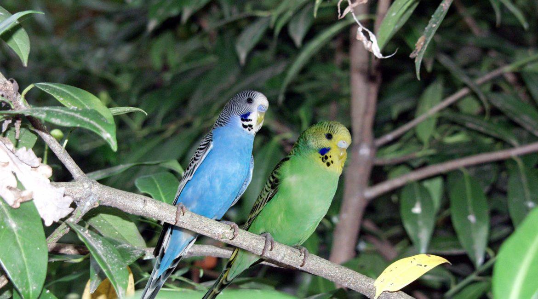 Urlaubsbetreuung Ziervögel