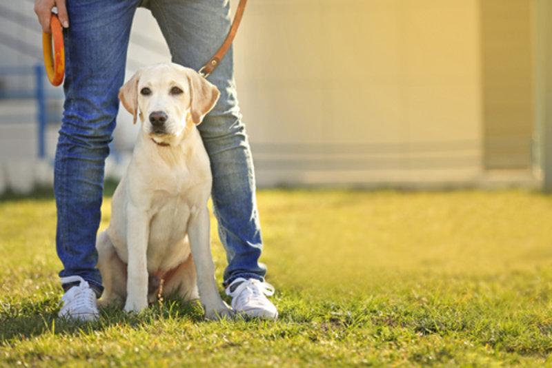 Erwartungshaltung bei Hunden