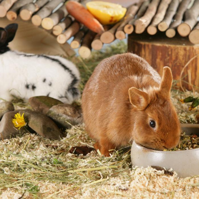 Tannenzweige: Gefahr für Kaninchen und Co