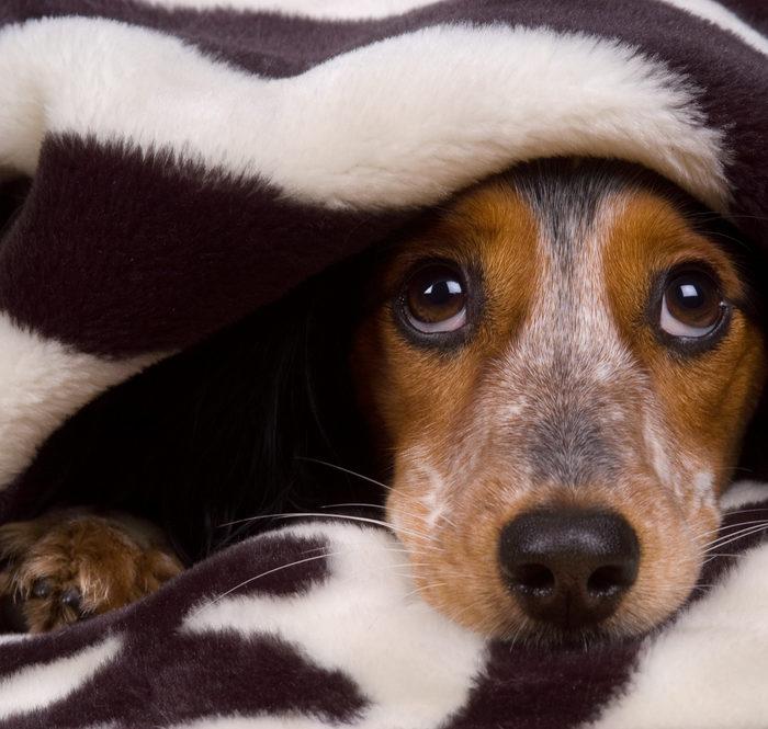 Silvesterkracher: Hunde und Katzen leiden unter Lärm