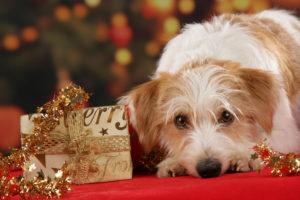 Hund Weihnachtsfest