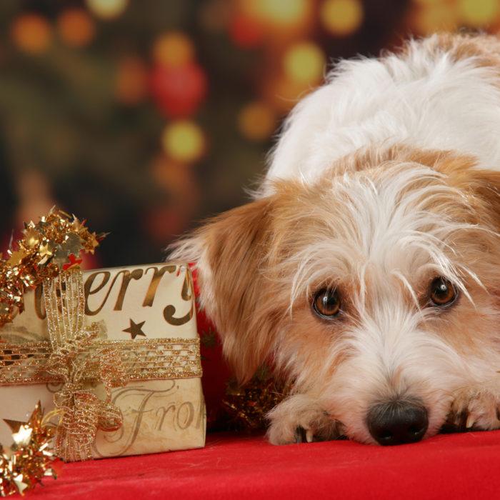 Tipps zum Weihnachtsfest für Mensch und Tier