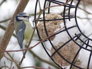 Wildvögel_Winterfütterung