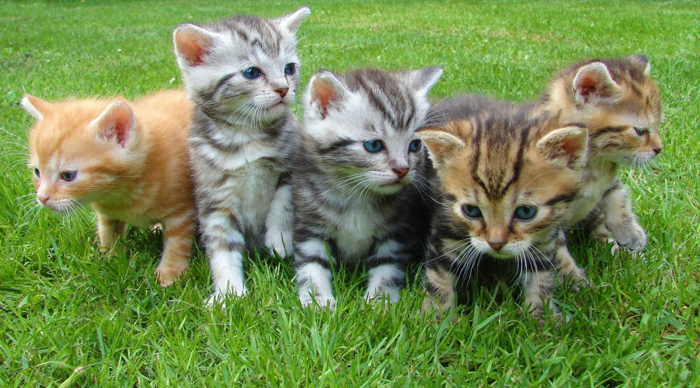 Kitten_Züchter