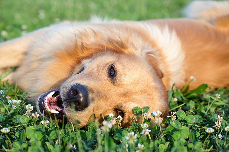 Fellwechsel Hund Frühling